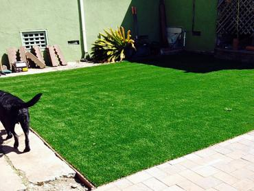 Artificial Grass Photos: Plastic Grass Palm Desert, California Pictures Of Dogs, Grass for Dogs