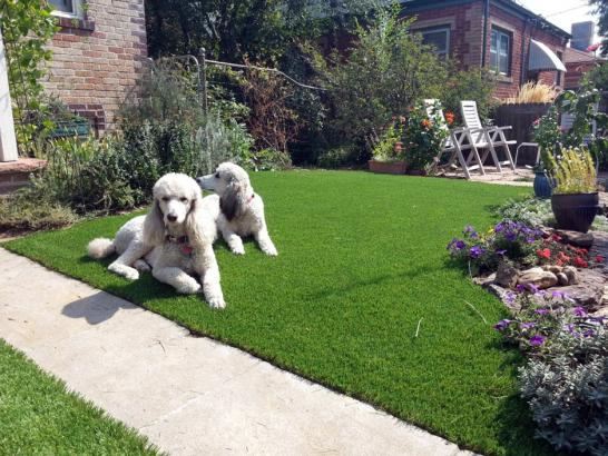 Artificial Grass Photos: Synthetic Turf Supplier Lakeland Village, California Dogs, Landscaping Ideas For Front Yard